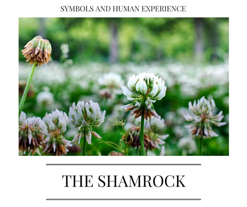 The Unassuming Shamrock A Powerful Symbol In History And Around
